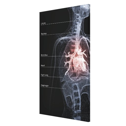 Diagram of the respiratory system and the heart canvas print