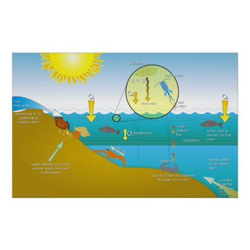 Diagram of the Water Eutrophication Process Print