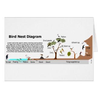 Diagram of Various Bird Nests Card