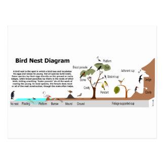 Diagram of Various Bird Nests Postcard