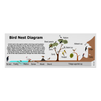 Diagram of Various Bird Nests Poster