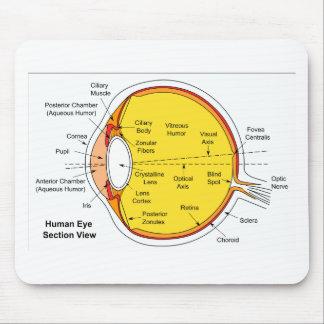 Diagrama anatómico de la bola del ojo humano tapetes de raton