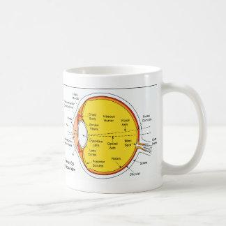 Diagrama anatómico de la bola del ojo humano tazas de café