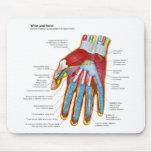 Diagrama anatómico de la mano y de la muñeca human tapete de raton