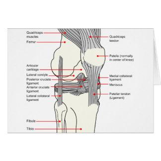 Diagrama anatómico de una junta de rodilla del der felicitaciones