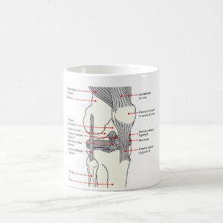 Diagrama anatómico de una junta de rodilla del taza clásica
