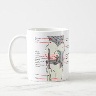 Diagrama anatómico de una junta de rodilla del taza de café