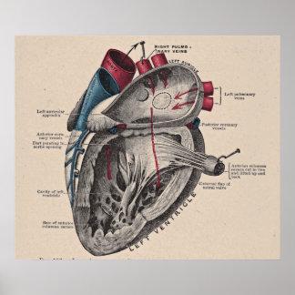 Diagrama anatómico del corazón del vintage póster
