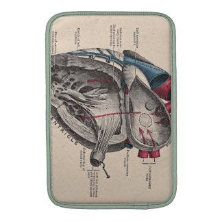 Diagrama anatómico del corazón fundas para macbook air
