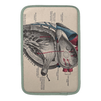 Diagrama anatómico del corazón funda para macbook air