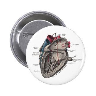Diagrama anatómico del corazón pin redondo de 2 pulgadas