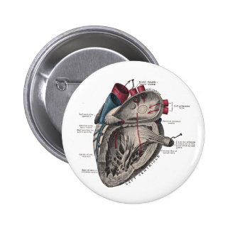 Diagrama anatómico del corazón pins