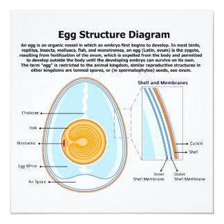 """Diagrama biológico de la anatomía de un huevo invitación 5.25"""" x 5.25"""""""