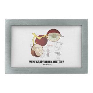 Diagrama científico de la anatomía de la baya de hebillas cinturon rectangulares