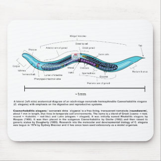 Diagrama de Caenorhabditis Elegans del ascáride de Tapete De Ratones
