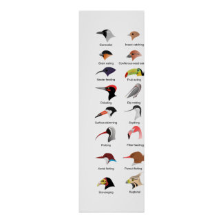 Diagrama de diversas adaptaciones del pico del páj impresiones
