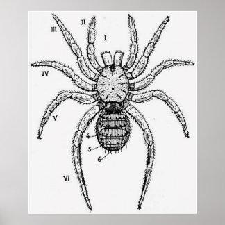 Diagrama de la araña del vintage poster