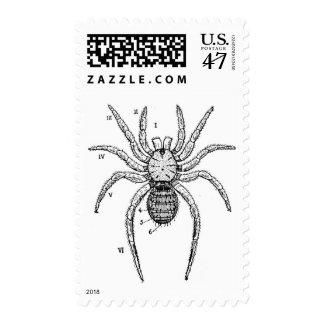 Diagrama de la araña del vintage sellos postales