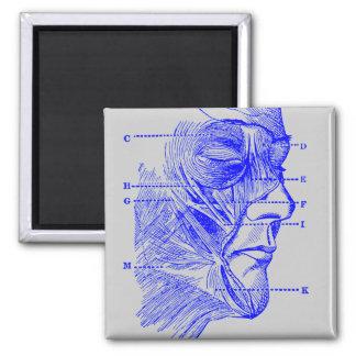 Diagrama de la cara iman de frigorífico