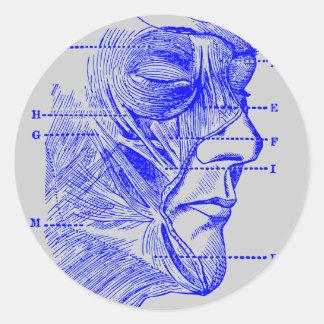 Diagrama de la cara pegatina redonda