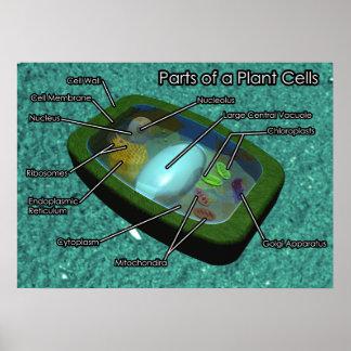 diagrama de la célula de la planta 3D Póster