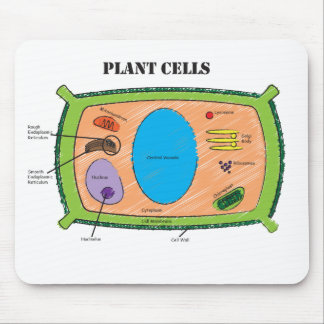 Diagrama de la célula de la planta alfombrilla de ratones