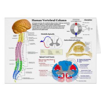 Diagrama de la columna vertebral humana felicitación