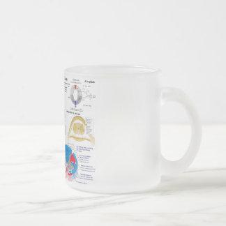 Diagrama de la columna vertebral humana tazas de café