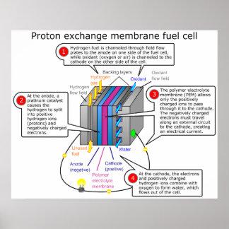 Diagrama de la pila de combustible de la membrana  póster