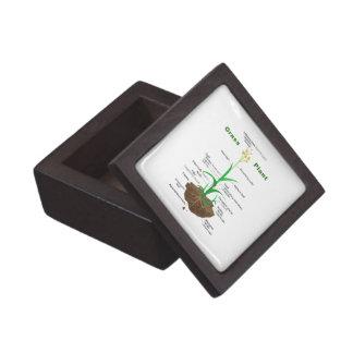 Diagrama de la planta de Graminoids de la hierba Cajas De Joyas De Calidad