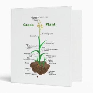 Diagrama de la planta de Graminoids de la hierba