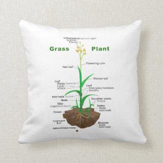 Diagrama de la planta de Graminoids de la hierba Cojines