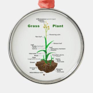 Diagrama de la planta de Graminoids de la hierba Adornos De Navidad