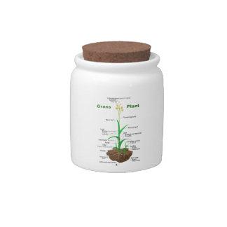 Diagrama de la planta de Graminoids de la hierba Plato Para Caramelo