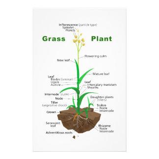 Diagrama de la planta de Graminoids de la hierba Papeleria