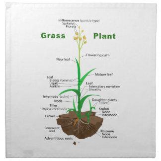 Diagrama de la planta de Graminoids de la hierba Servilleta