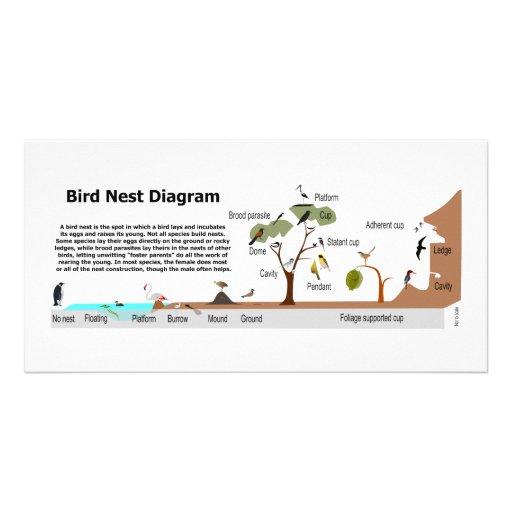 Diagrama de las diversas jerarquías del pájaro tarjetas personales con fotos