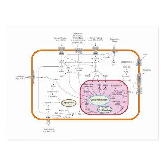 Diagrama de los caminos de la transducción de la postal