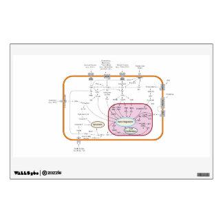 Diagrama de los caminos de la transducción de la vinilo adhesivo
