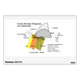 Diagrama de los lepidópteros del campo común de un