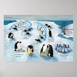 Diagrama de un ciclo vital del pingüino de emperad poster