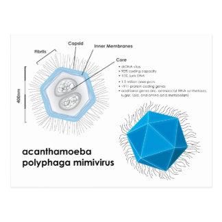 Diagrama del APMV del mimivirus del polyphaga de Postal