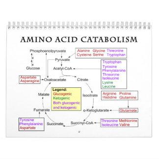 Diagrama del catabolismo del aminoácido calendario