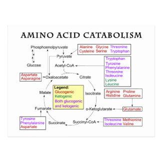 Diagrama del catabolismo del aminoácido postales
