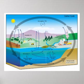 Diagrama del ciclo de carbono biogeoquímico poster