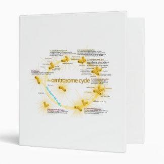 Diagrama del ciclo del centrosoma