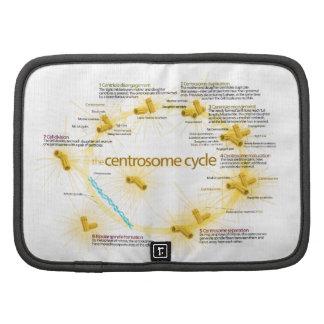 Diagrama del ciclo del centrosoma planificador