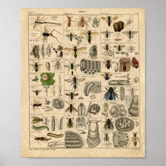 Diagrama del insecto del vintage póster