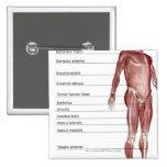 Diagrama del sistema muscular pin cuadrado