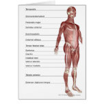 Diagrama del sistema muscular tarjeta de felicitación